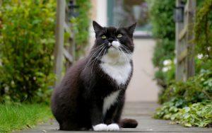 28-02-17-black-white-cat17716