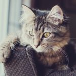 28-02-17-cat-look-photo16024