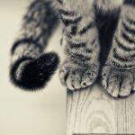 28-02-17-cat-paws-115098
