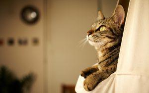 28-02-17-cat-photo10323