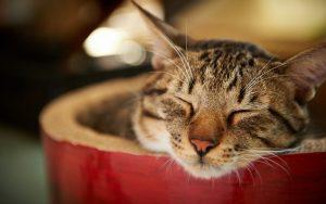 28-02-17-cat-rest13653