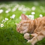 28-02-17-cat-sleep-in-grass15182