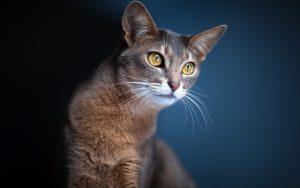 28-02-17-cat11998