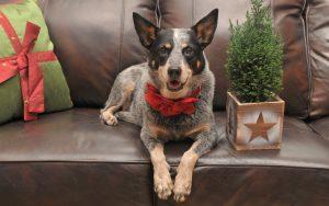 28-02-17-christmas-dog-holiday15047