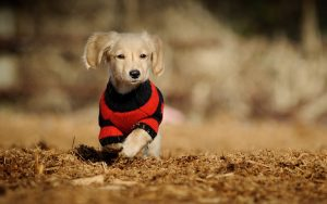 28-02-17-clothed-cute-dog13280