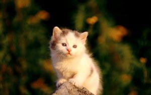28-02-17-cute-baby-cat5128