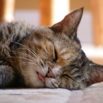 28-02-17-cute-cat-sleeping-background16905