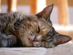 28-02-17-cute-cat-sleeping-background16905