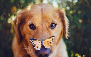28-02-17-dog-butterfly-photo10952