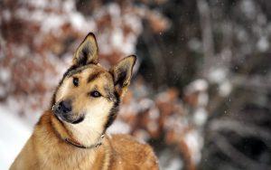 28-02-17-dog-friend-winter16033