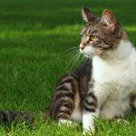 28-02-17-domestic-cat17892