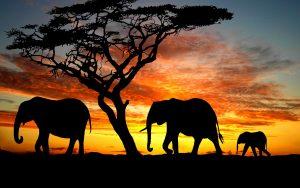 28-02-17-elephants-silhouette10692