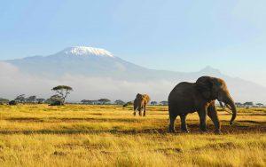 28-02-17-elephants-wildlife17411