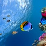 28-02-17-fish-wallpaper-hd15796