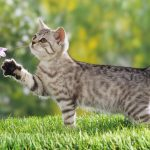 28-02-17-flowers-and-cat-wallpaper-photos14983