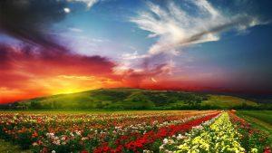 28-02-17-flowers-landscape7433