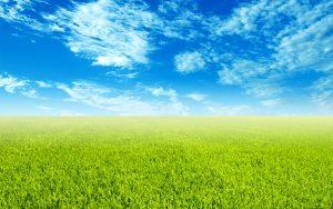 28-02-17-grass-landscape-background7211