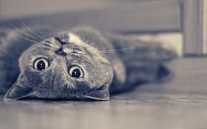 28-02-17-gray-cat17915