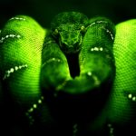 28-02-17-green-snake-wallpaper14261