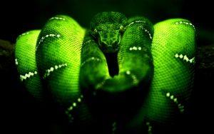 28-02-17-green-snake-wallpaper14261