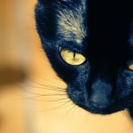 28-02-17-hd-black-cat-wallpaper9530