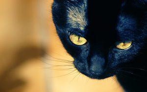 28-02-17-hd-black-cat-wallpaper9530
