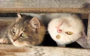 28-02-17-headlong-cat14471