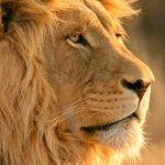 28-02-17-lion10826-