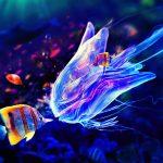 28-02-17-queen-jellyfish15371