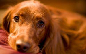28-02-17-sad-dog15331