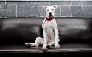 28-02-17-sofa-dog13869