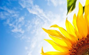 28-02-17-sunflower-wallpapers1823