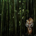 28-02-17-tiger-design-wallpaper15154