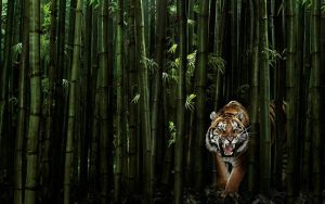 28-02-17-tiger-design-wallpaper15154