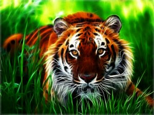 28-02-17-tiger-wallpapers956