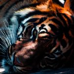 28-02-17-tiger-wallpapers992