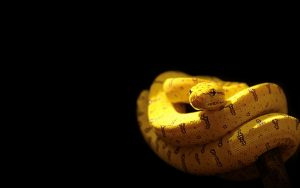 28-02-17-yellow-snake-wallpaper9721
