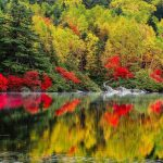 ---autumn-lake-forest-6766