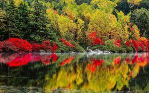 ---autumn-lake-forest-6766