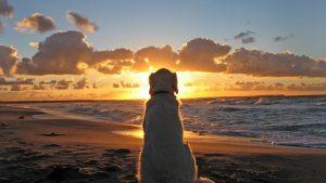 ---beach-sunset-wallpapers-2403