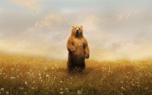 ---bear-standing-6998