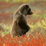 ---bear-wallpapers-750