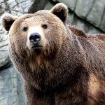---bear-wallpapers-752
