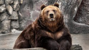 ---bear-wallpapers-754