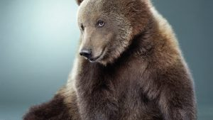 ---bear-wallpapers-755