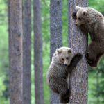 ---bear-wallpapers-760