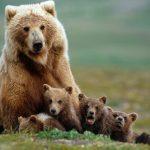 ---bear-wallpapers-761