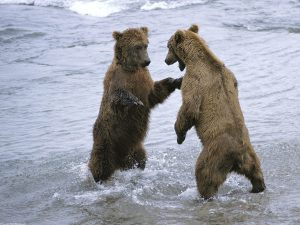 ---bears-13513