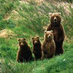 ---bears-6999