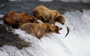 ---bears-7001